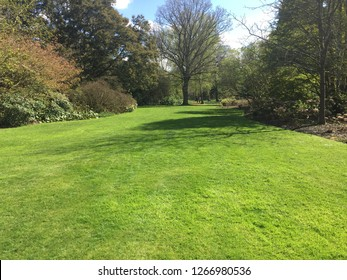 Green lawn with trees in park in summer season
