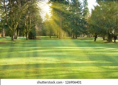 Green lawn with trees in park with sunny light