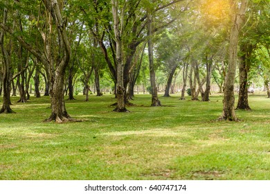 Green lawn with trees in urban park