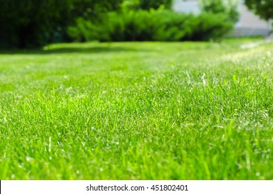 green lawn yard