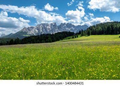 Green lawn and yellow dandelion flowers on a lawn in Val Badia - Gadertal in Alto Adige - South Tyrol. Mountain landscape with view of the Dolomites