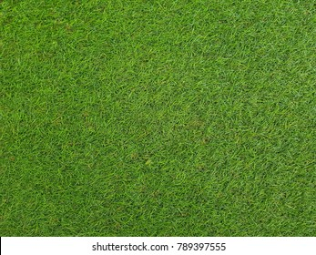 Green lawn.Football field in the park near the house.Refreshing, Natural background. Wallpaper,texture.green grass field.
