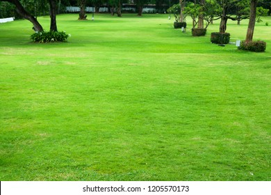 Green lawns in the garden. The trees are arranged in rows. For outdoor activities