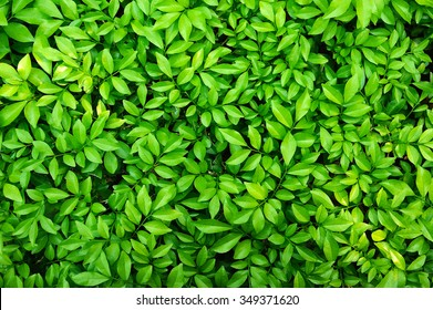 leaf background images stock photos vectors shutterstock