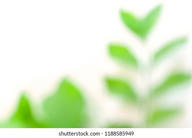green leaf abstract background. tropical leaf abstract.