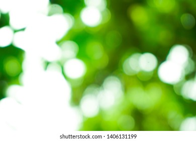 the green leaf, abstrak photography