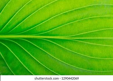 green leaf as background