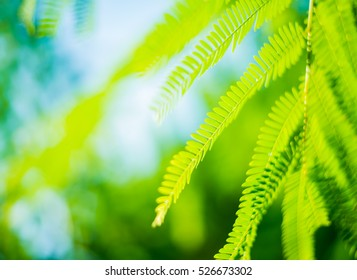 Green leaf background blur focus