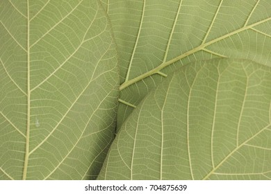 green leaf background close up texture