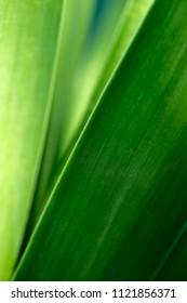 A green leaf background detail
