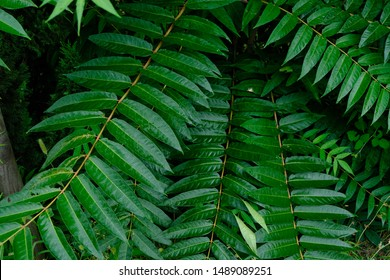 Green Leaf Background, natural leaf pattern