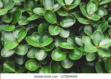 Green leaf background nature design texture pattern copy spec abundance backgrounds beauty in Nature close-up Clover day directly above Freshness full frame Green color Growth high angle view leaf lea