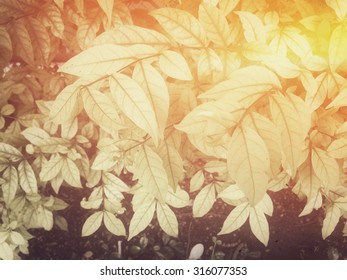 Green leaf background. retro style