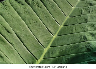 Green leaf background with sun light and shadow