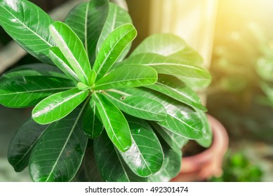 green leaf background with sunlight