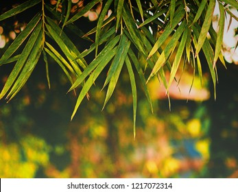 green leaf of bamboo in the nature background