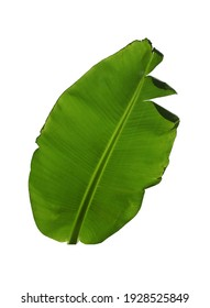 Green leaf of banana plant isolated on white