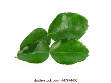 Green leaf, Bergamot leaf isolated on white background