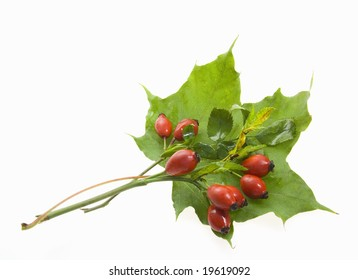 green leaf with berries on white