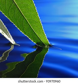 green leaf in blue water