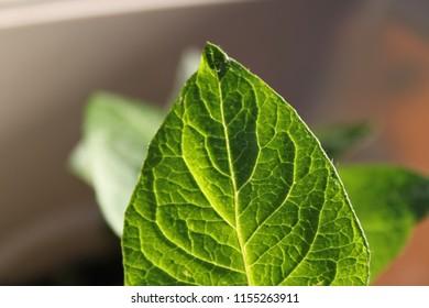 green leaf blur background