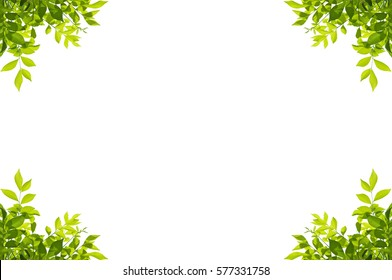 leaf border images stock photos vectors shutterstock rh shutterstock com grape leaf border clip art maple leaf border clip art