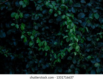 green leaf bush, tropical botany style background