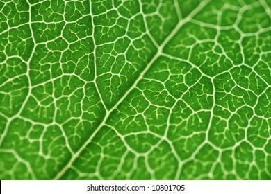 A green leaf close up shot