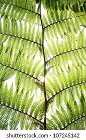Green leaf, close-up.
