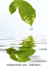 Green leaf coffee with a drop of water