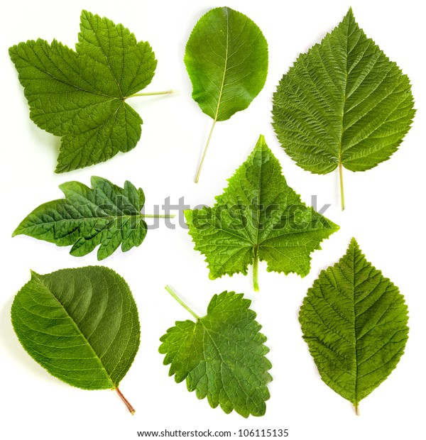 Green leaf collection on white background