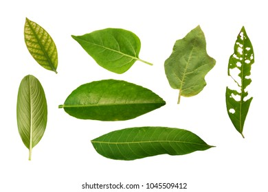 green Leaf Collection. Saved clipping path.concept: nature , different kind of leavs
