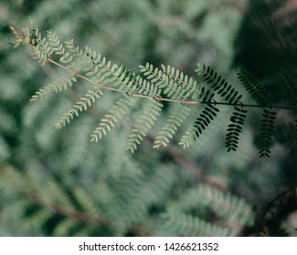 green leaf with with depth of field