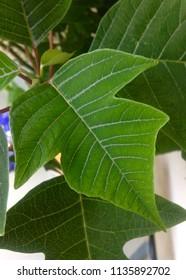 Green leaf detail in daylight