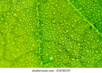 Green leaf with drops of dew, background, texture, close-up