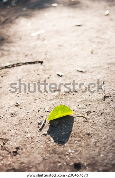 Green leaf. Fallen from tree leaf on ground in sunlight. Natural background