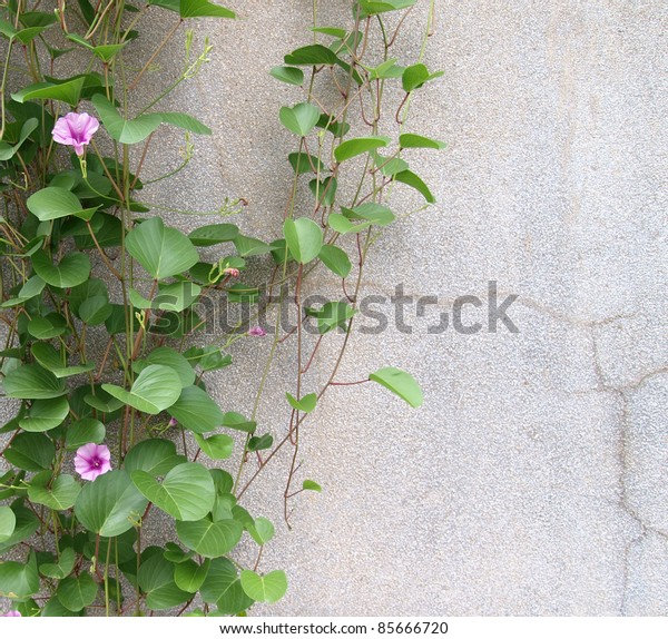Green leaf and flower on the wall