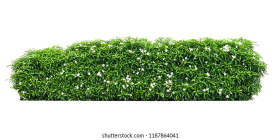 green leaf flower plant on white background