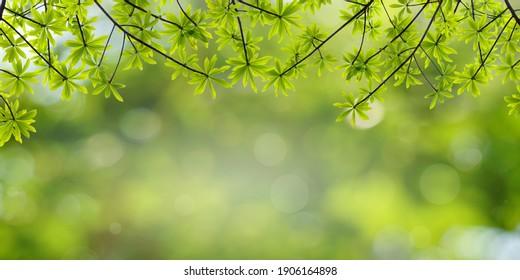 Green leaf frame with natural blurred background. Spring background