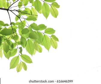 Green leaf frame on a white background