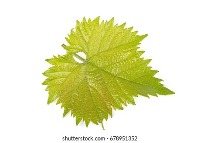 Green leaf of grapes on white background