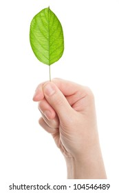 Green leaf in hand isolated on white background