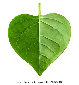 green leaf heart shape isolated on white background
