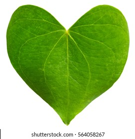 Green leaf heart shaped. Valentine's Day concept. Protection of environment concept.