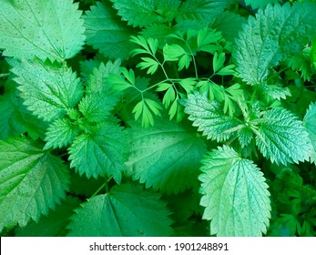 green and leaf and herbal