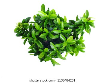 green leaf house plant fresh nature isolated white background
