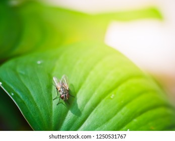 green leaf and housefly with macro view