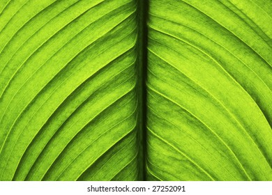Green Leaf isolated on a black background