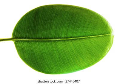 Green Leaf isolated on a black or white background