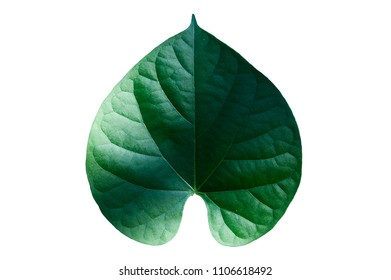 the green leaf isolated on white background